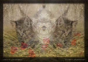 Katzen und Natur